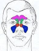 facial sinuses
